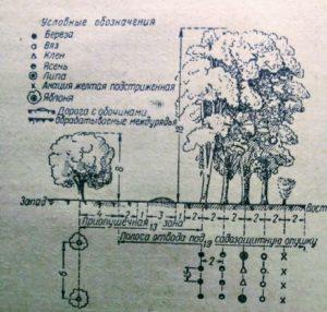 Лесополоса садозащитная 5- рядная